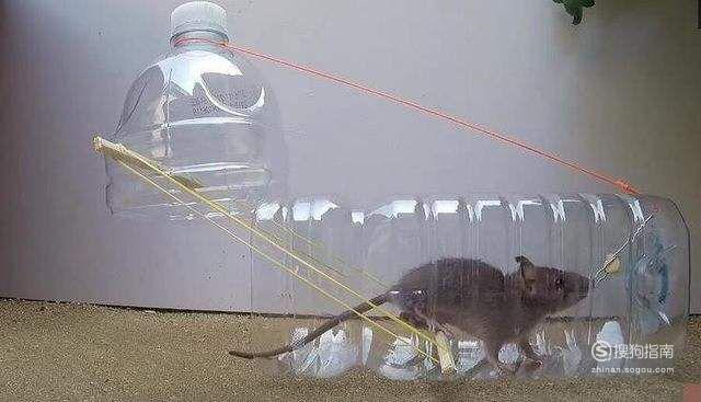 教你DIY 捕鼠神器制作