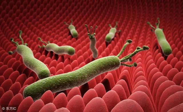 幽门螺杆菌会引发胃病吗?如何预防胃病?,来充电吧