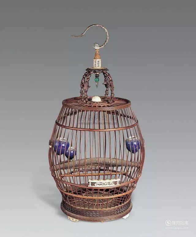 麻料鸟饲养和日常管理技巧