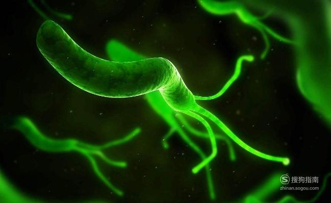 幽门螺杆菌如何才能根治?,来学习吧