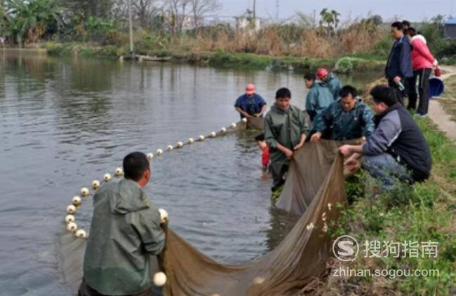 粘网捕鱼技巧 懂得这些技巧就够了