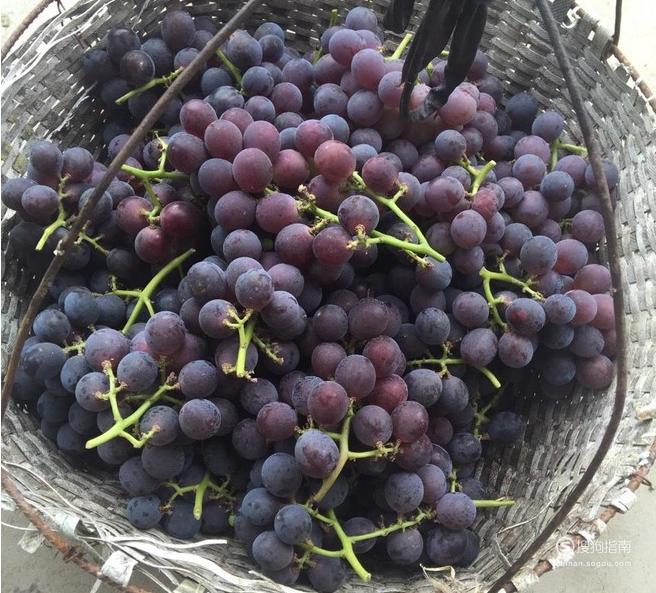 如何自己做葡萄酒