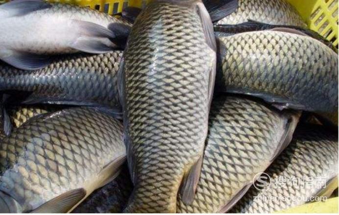 怎样挑选新鲜的鱼?,