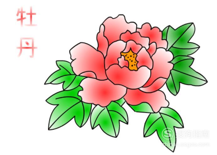 简笔画:如何使用Flash绘制牡丹花,懂得这些技巧就够了