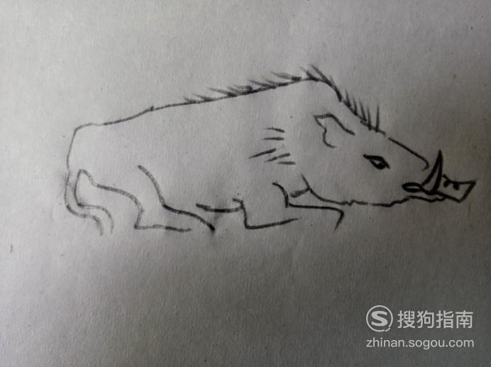 简笔画之野猪,具体内容