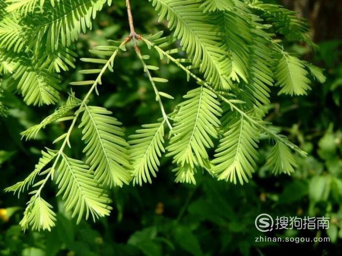 盘点中国十大珍稀植物,具体内容