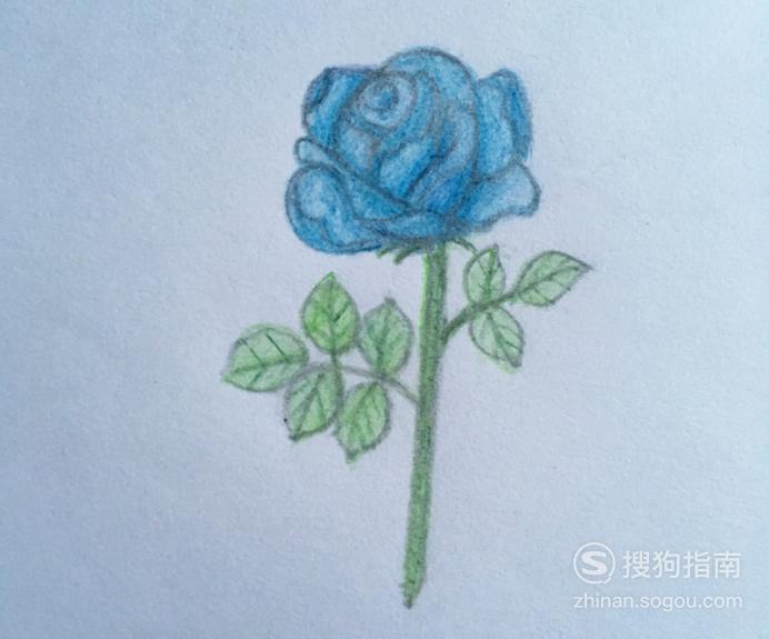 如何用彩色铅笔画蓝色妖姬 原来是这样的