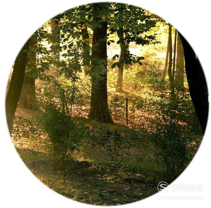 怎么把照片做成圆形的 具体内容