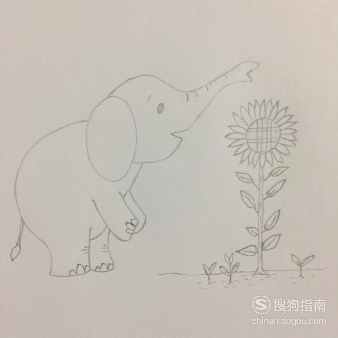 简笔画小象史麦福与向日葵 经验告诉你该这样