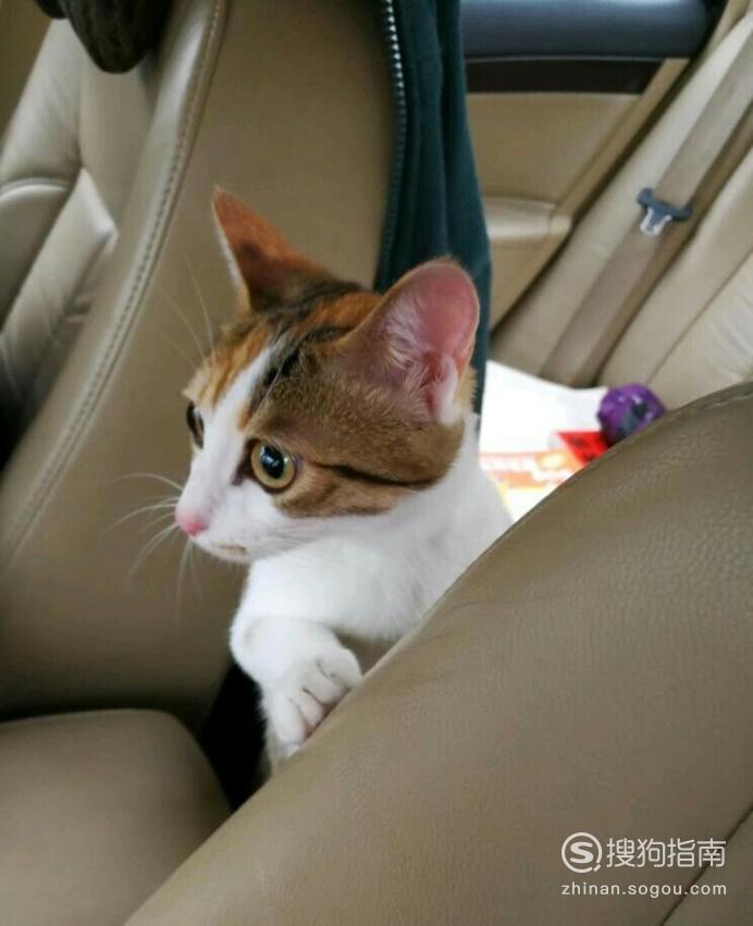 怎样正确溜猫咪