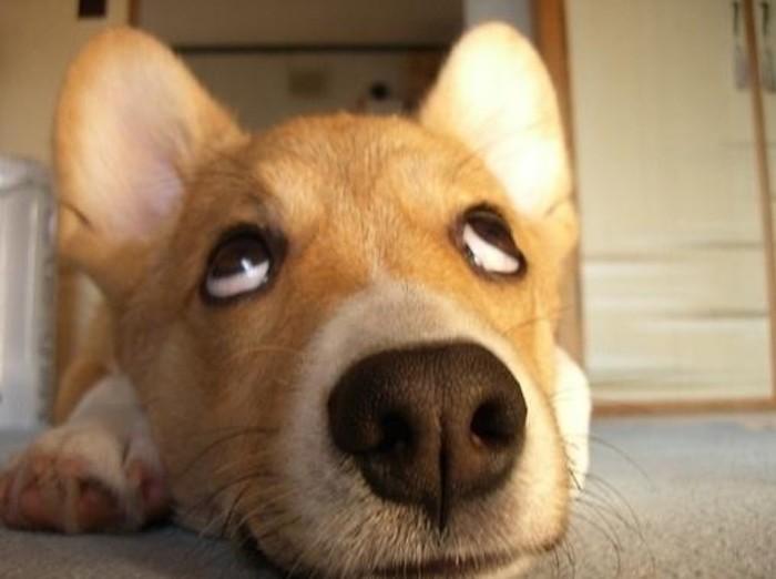 狗狗什么时候配种最好