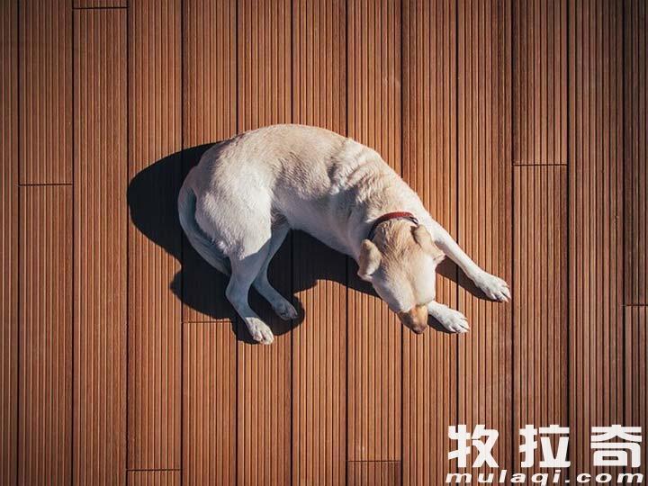狗狗会得抑郁症吗?狗狗得了抑郁症怎么办?,划重点了