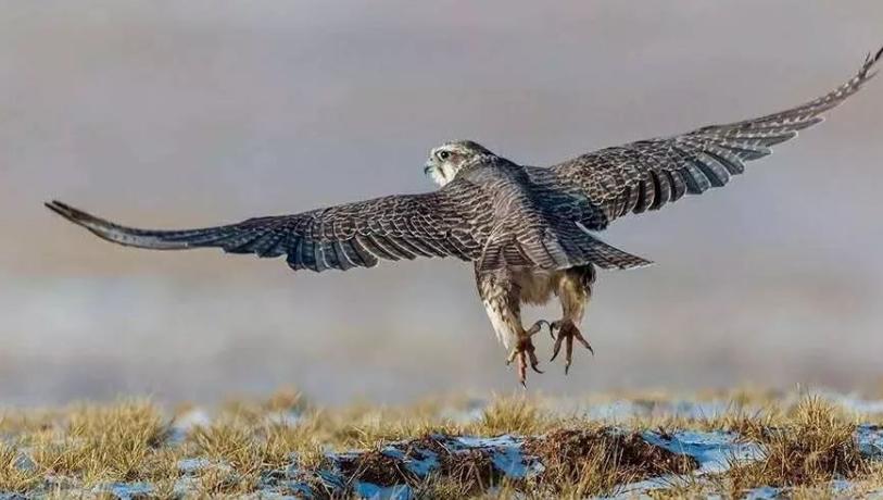 最贵的10种观赏鸟,第