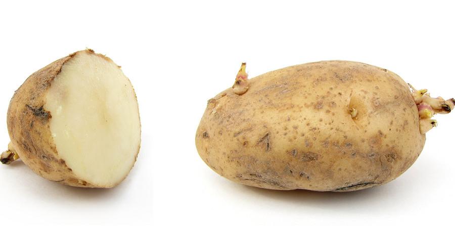 土豆发芽后真的有毒吗?还能吃吗? 需要技巧
