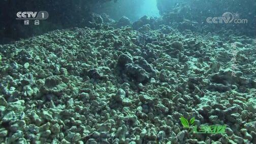 《人与自然》 20200809 珊瑚礁深处