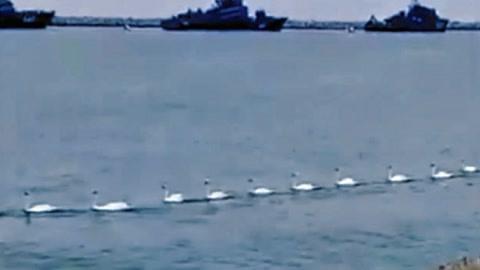 俄主力舰集结竟用鹅警戒