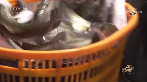 《致富经》 20190816 七年布局 只为一条鱼