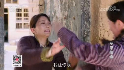 [乡村法制剧场]苹果情缘 20190726