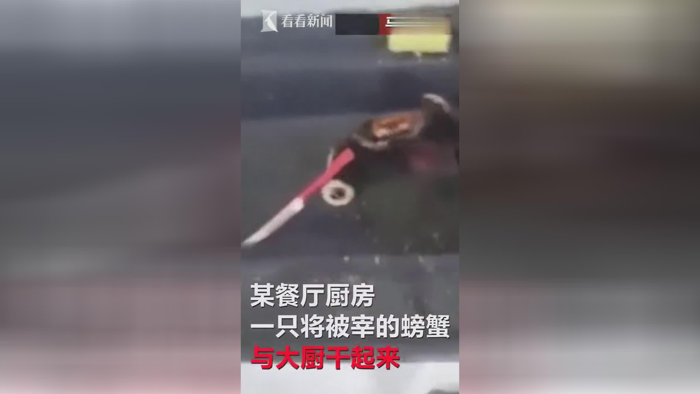 螃蟹不甘做盘中餐持刀与厨师对砍 居然还能换手攻击