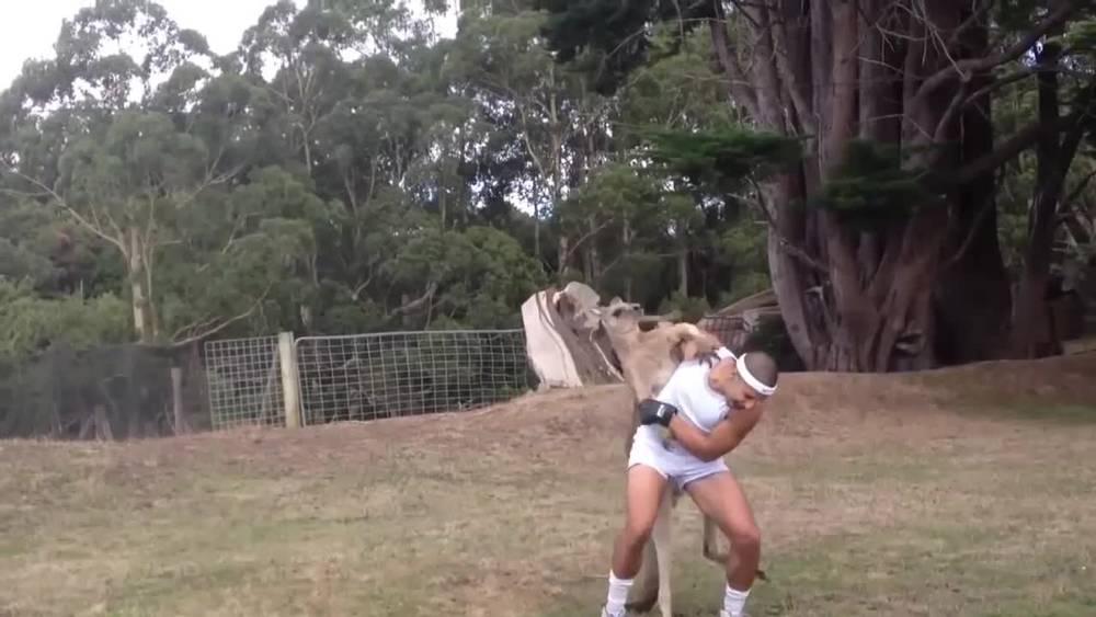 男子和袋鼠进行拳击比赛,不过你们确定这是在打架,不是在搞笑?