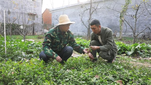 拔到这么大一棵萝卜,农人阿Q乐开了花!在村里唱了这么一首歌!
