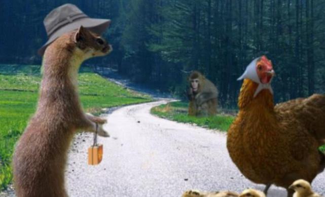 天龙sf网站为什么说看到黄鼠狼不能打杀?并非是因为迷信,有科学依据