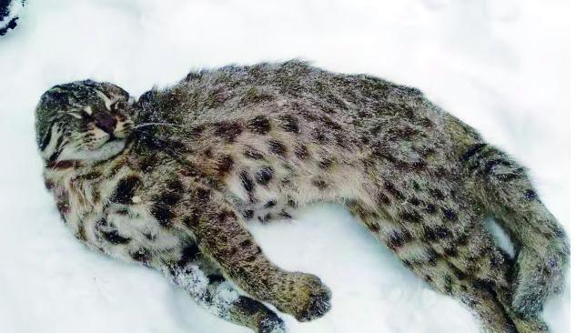 dnf私服辅助黑狼哈尔滨警方查获贩卖野生动物窝点 豹猫、獾、山雀摆满屋
