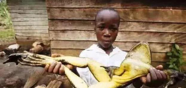 """天龙八部私服基地非洲菜市场太""""重口"""", 40美金一只的""""大蝙蝠"""", 你敢吃吗?"""