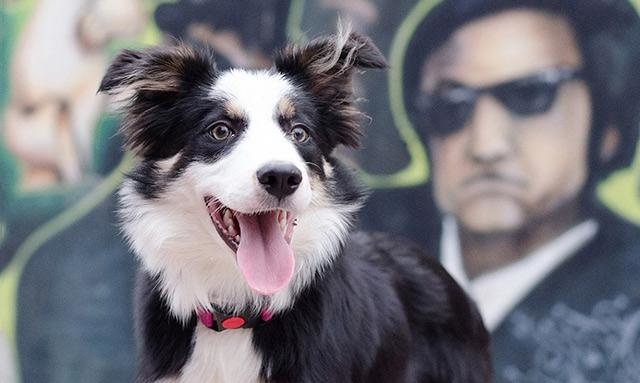 冒险岛私服发布网到狗的世界看看,狗可能是上帝派来的天使,藏獒等厉害了