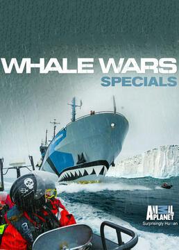 护鲸大战战斗伤痕剧照