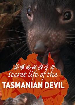袋獾的秘密生活剧照
