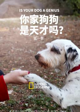 你家狗狗是天才吗?第一季剧照