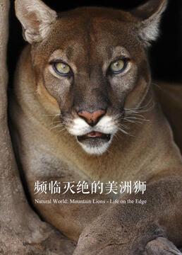 频临灭绝的美洲狮剧照