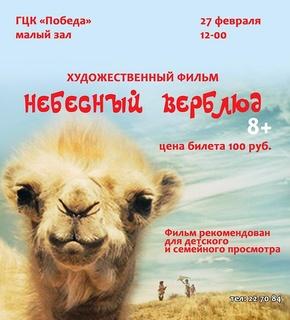 天上的骆驼剧照