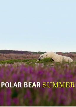 北极熊之夏剧照