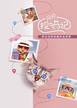 捉喵记岩合光昭的猫步走世界