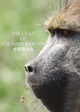 小狒狒家族剧照