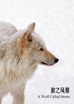狼之风暴剧照