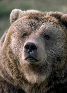 熊国度电单车日记