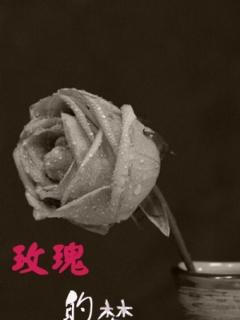 玫瑰的梦剧照