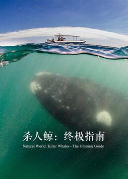 杀人鲸终极揭秘剧照