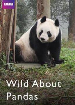 情迷大熊猫剧照