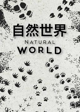 自然世界剧照