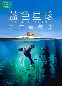 蓝色星球海洋自然史剧照