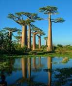 马达加斯加干热之岛剧照