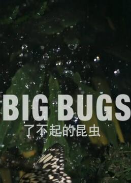 了不起的昆虫剧照