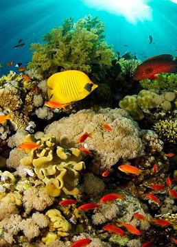 我们能拯救珊瑚礁吗?剧照