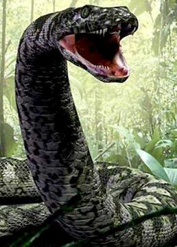 细数十大巨蛇之最剧照