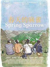 春天的麻雀